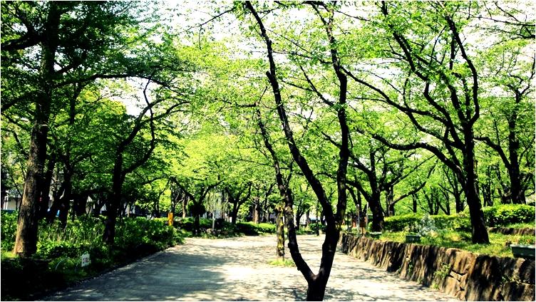 Green wind.JPG