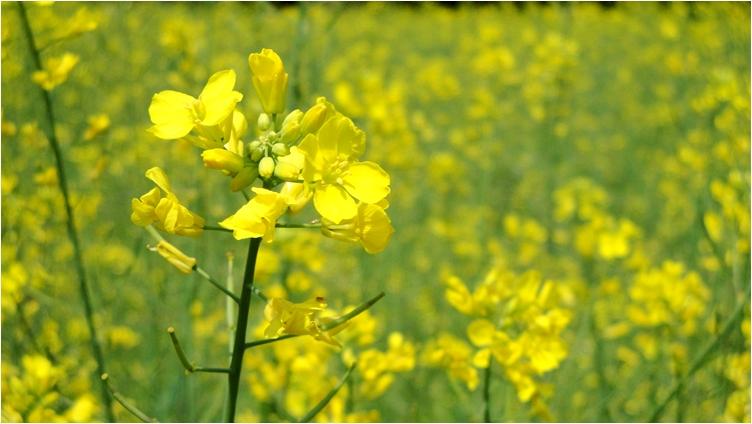 Yellow yellow.JPG